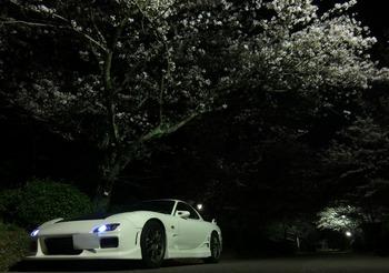 FDと桜その1.jpg