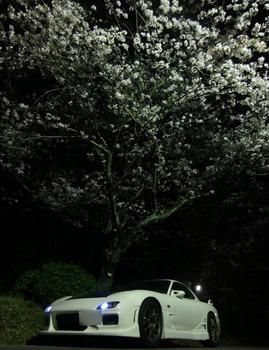 FDと桜その2.jpg