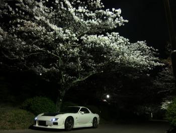 FDと桜その3.jpg